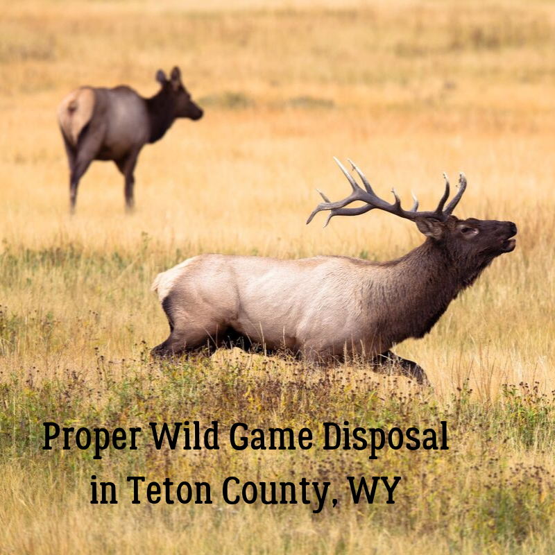 Elk_Proper Wild Game Disposal in Teton County, WY